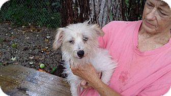 Terrier (Unknown Type, Small) Mix Dog for adoption in Port Clinton, Ohio - Peanut