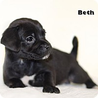 Adopt A Pet :: Beth - Shamokin, PA
