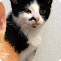 Adopt A Pet :: Bing Clawsby - DuQuoin, IL