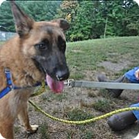 Belgian Malinois Mix Dog for adoption in Hyde Park, New York - Clora