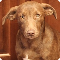 Adopt A Pet :: Zack Chapman Pending Adoption! - Mahwah, NJ