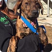 Adopt A Pet :: Esse - Beacon, NY