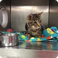 Adopt A Pet :: Madrina - Janesville, WI