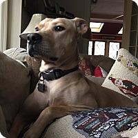 Adopt A Pet :: Daisy - Ellaville, GA