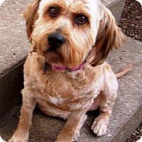 Adopt A Pet :: Brandy *CL* - Independence, MO