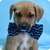 Adopt A Pet :: Skipper - Picayune, MS