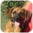 Photo 1 - Beagle Mix Dog for adoption in Westport, Connecticut - Jack