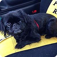 Adopt A Pet :: Pearl - Vansant, VA