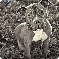 Adopt A Pet :: Lexis - Marion, WI