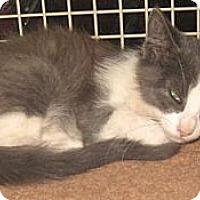 Adopt A Pet :: Bluetooth - Dallas, TX