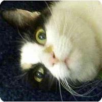 Adopt A Pet :: Dandelion - Annapolis, MD