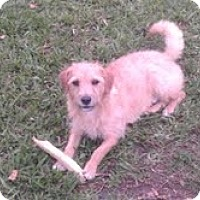 Adopt A Pet :: Buddy - Miami, FL
