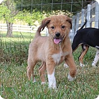 Adopt A Pet :: Omar - Hagerstown, MD