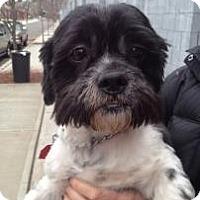 Adopt A Pet :: Barnabas - Rockaway, NJ