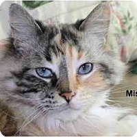 Adopt A Pet :: Misty - Portland, OR