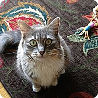 Adopt A Pet :: Gracie Mae (Courtesy Post) - North Branford, CT