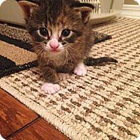 Adopt A Pet :: Salina - Edmonton, AB