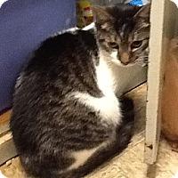 Adopt A Pet :: Oreo - Colmar, PA