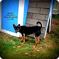 Adopt A Pet :: Buddy - Gadsden, AL