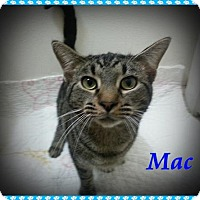 Adopt A Pet :: Mac - Orange City, FL