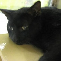 Adopt A Pet :: Blackie - Logan, UT