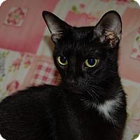 Adopt A Pet :: Passion - Burlington, ON