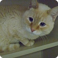 Adopt A Pet :: Peaches - Hamburg, NY