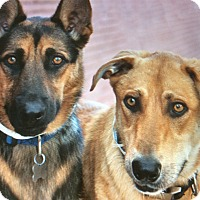 Adopt A Pet :: MAKO AND PAZEL - Los Angeles, CA