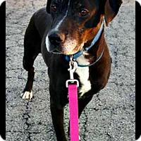 Adopt A Pet :: Libby - Plainfield, IL