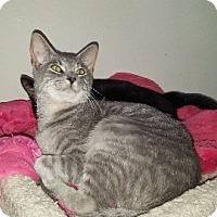Adopt A Pet :: Ashton - Aurora, IL