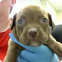 Adopt A Pet :: A273024 - Conroe, TX