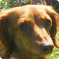 Adopt A Pet :: Divet - MINNEAPOLIS, KS