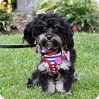 Adopt A Pet :: MILTON - Newport Beach, CA