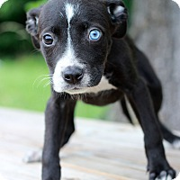 Adopt A Pet :: Katherine - Waldorf, MD