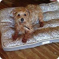 Adopt A Pet :: Abigail - Bunnell, FL