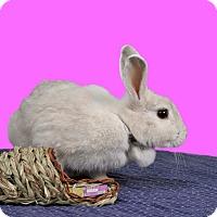 Adopt A Pet :: Elusive - Marietta, GA