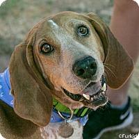 Hound (Unknown Type) Mix Dog for adoption in Atlanta, Georgia - Doris Day