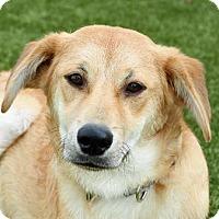 Adopt A Pet :: Sully - Wenatchee, WA