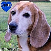 Adopt A Pet :: Clifford - South Plainfield, NJ