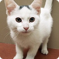 Adopt A Pet :: ADOPTED!!!   Candice - Plainfield, IL