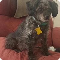Adopt A Pet :: Chandra - Salt Lake City, UT