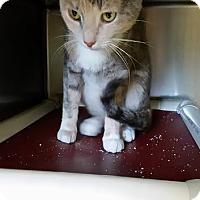 Adopt A Pet :: Dayna - Chippewa Falls, WI