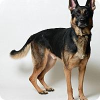 Adopt A Pet :: Blitzen - New Albany, OH