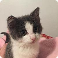 Adopt A Pet :: Tyka C160415: NO LONGER ACCEPTING APPLICATIONS - Edina, MN