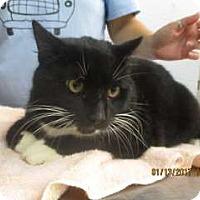 Adopt A Pet :: Skywalker - Douglasville, GA