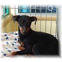 Adopt A Pet :: Kiara's Kirby - Las Vegas, NV