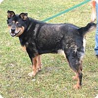 Adopt A Pet :: Logan - Akron, OH