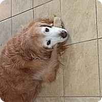 Adopt A Pet :: Chloe - Yorktown, VA