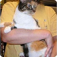 Adopt A Pet :: Izabella - Colmar, PA