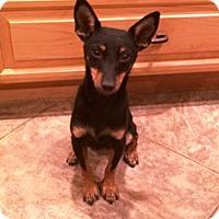 Adopt A Pet :: Minnie - Tustin, CA